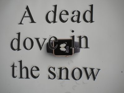 A Dead Dove In The Snow